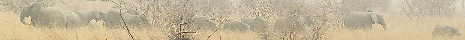 African Elephants in Arli National Park, Burkina Faso.