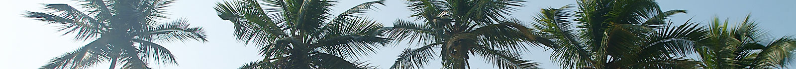 Ghana Palm Tree Tops