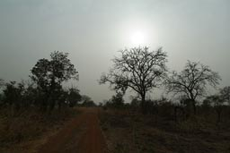 Approaching Arli, evening, Savanna