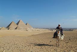 Donkey rider in front of Giza Pyramids.