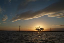 Water in the desert, sunset behind tree.
