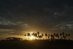 Sunset between palm trees Benin, beach Grand-Popo