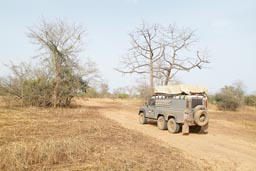 Sahel, dust and dryness, Niger National Park.