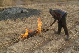 Man burning scrub before rainy season on fields in Mali.
