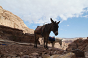 Petra, donkeys, desert mountains, Jordan
