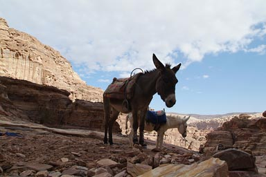 Donkeys and desert mountains Petra, Jordan.