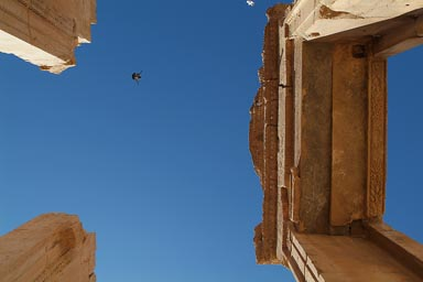 Pigeons and sky, top of columns, Temple of Bel, Palmyra.