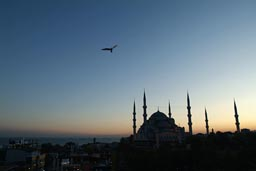 Blue dusk over Blue Mosque, Istanbul. Seagull.