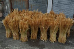 Straw in bushels, trabzon, Turkey