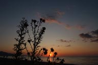 Thistle, Black Sea Coast, Sunset and Sea.