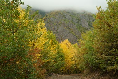 Yellow trees, cliffs, clouds hanging low, Yeni Rabat trail, Turkey.