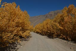 Autumn colours, road in Nemrut crater, Turkey, Van.