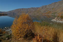 Caldera and lake, fall, yellow trees and bushes around blue lake.