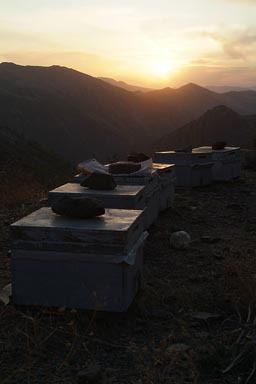 Honey produced in Turkey, Kurdish region. Sunset. Mountains.