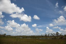 Swamps, savanna, Belize, Dangriga road.