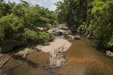 River through jungle, Belize.