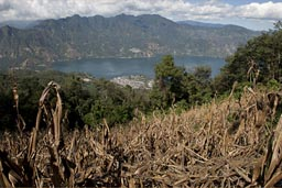 Corn fields, San Pedro Volcan. Lake Atitlan below.