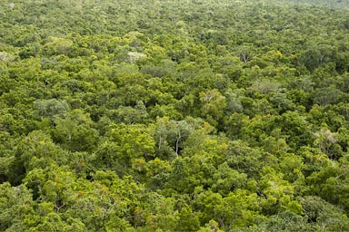 Maya jungle as far as eyes can see. El Mirador.