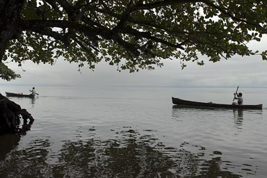 Marisco on Lake Izabal, canoes under huge tree in the haze. Guatemala.