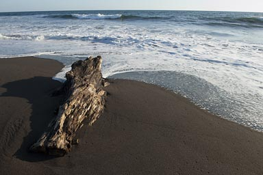 Drifft wood, Guatemala beach of Monterico. Pacific Ocean.