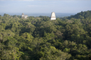 Maya Pyramids sticking out of the jungle, Tikal, Peten, Guatemala.