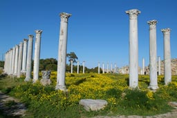 Yellow flowers, Salamis, Cyprus.