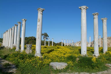 Salamis, yellow flowers.