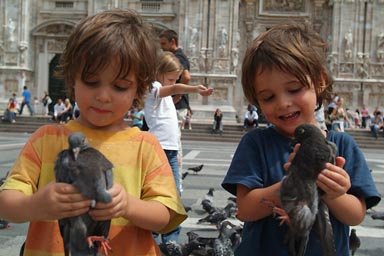 Capturing pigeons in Milan.