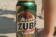 Zubr, Polish bison beer.