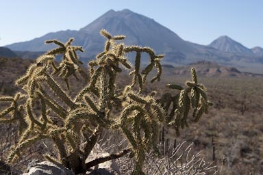 Cactus and mountains in Baja California.