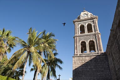 Loreto, Baja, mission and palms and bird.