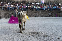 Bullfighting Yucatan.