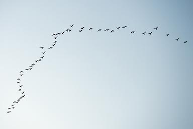 Soon the first flock of birds over Rio Lagartos.