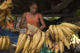 Bananas being sold.