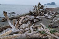 Cape Alava beach, trunks of wood.