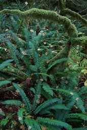 Fern, moss near ground.