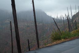 Fog and rain, Mount St. Helens.