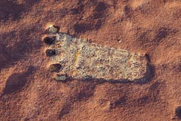 Foot print on red rock in Chelly Canyon.
