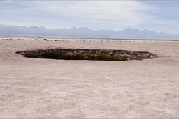 Eyes in the Salt flat desert, Atacama.