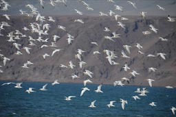 Birds over Playa La Rinconada.