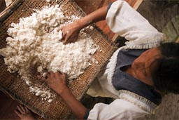 Preparing yuca/cassava/manioc flower. Yuca bread in Ecuador Amazon basin.