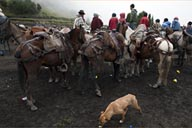 Horses, dogs in the rain and the mud. Fog in Salinas, Ecuador.