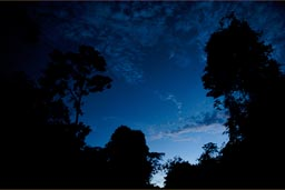 Nightly sky turns darker over huge trees, later plenty of stars blink over the Peruvian jungle.
