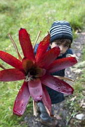 David shows me a huge red flower, Kuelap.