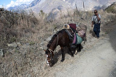 In southern Amazonas, Peru, Mountain road a man and horse climb.
